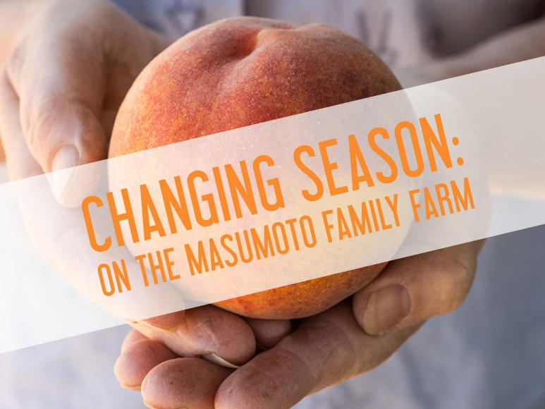 """Changing Season chronicles a transitional year-in-the-life of famed farmer, slow food advocate, and sansei, David """"Mas"""" Masumoto, and his compelling relationship with daughter Nikiko, who returns to the family farm with the intention of stepping into her father's work boots. Directed by Jim Choi, co-produced with CAAM."""
